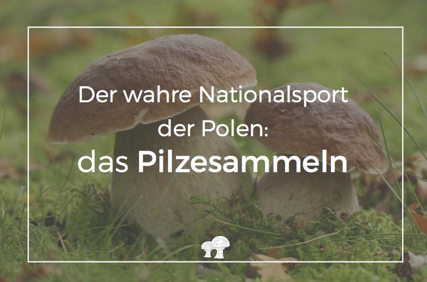 pilze sammeln frankfurt polnisch